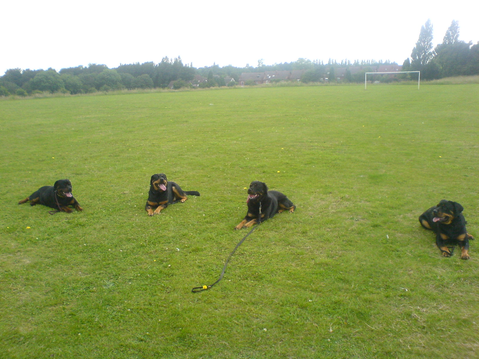breed specific class (rotties)